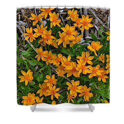 Shower Curtain featuring the photograph Little Sunflower In The Mountains by Janice Rae Pariza
