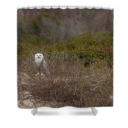 Shower Curtain featuring the photograph Little Talbot Snowbird by Paul Rebmann