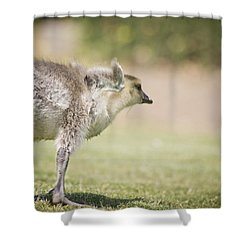 Shower Curtain featuring the photograph Little Wing by Priya Ghose