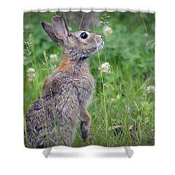 Live In Clover Shower Curtain by Brian Wallace
