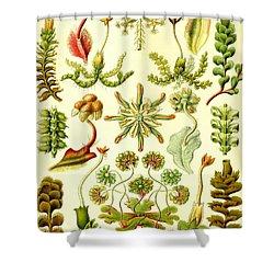 Liverworts Moss Brunnenlebermoos Haeckel Hepaticae Shower Curtain