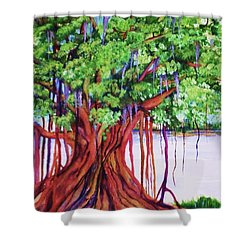 Living Banyan Tree Shower Curtain