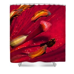 Living Inside A Lily Shower Curtain by Phyllis Denton