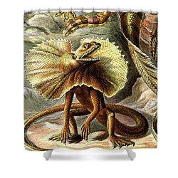 Lizard Detail IIi Shower Curtain by Unknown