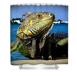 Lizard Sunbathing In Miami Shower Curtain by Monique Wegmueller