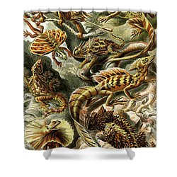 Lizards Lizards And More Lizards Shower Curtain by Unknown