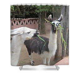 Llamas In Peru Shower Curtain