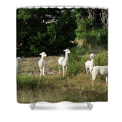 Llamas Standing In A Forest Shower Curtain by Panoramic Images