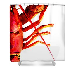 Lobster - The Right Side Shower Curtain by Sharon Cummings