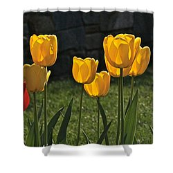 Lollipop Tulips And Grass And Stone Wall Shower Curtain by Byron Varvarigos