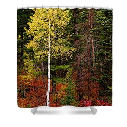 Lone Aspen In Fall Shower Curtain by Chad Dutson