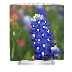 Lone Bluebonnet Shower Curtain