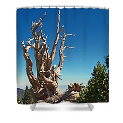 Shower Curtain featuring the photograph Lone Bristlecone by Alan Socolik