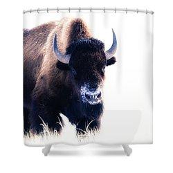 Lone Bull Shower Curtain