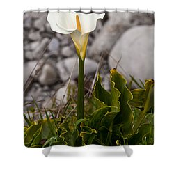 Lone Calla Lily Shower Curtain by Melinda Ledsome