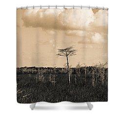 lone cypress III Shower Curtain
