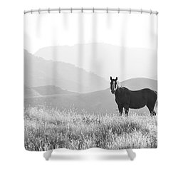 Lone Horse Shower Curtain by B Christopher
