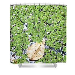 Lone Leaf Shower Curtain