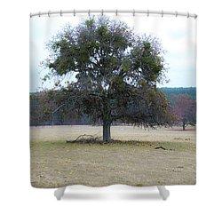 Lone Oak In Pasture Shower Curtain