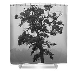 Shower Curtain featuring the photograph Lone Oak by Viviana  Nadowski