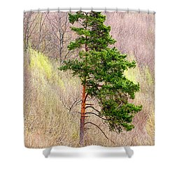 Shower Curtain featuring the photograph Lone Pine by Les Palenik