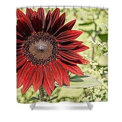 Lone Red Sunflower Shower Curtain by Kerri Mortenson