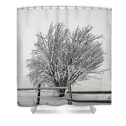 Lone Tree Shower Curtain by John Haldane