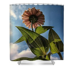 Lone Zinnia 01 Shower Curtain by Thomas Woolworth