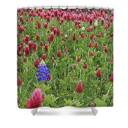 Lonely Bluebonnet Shower Curtain