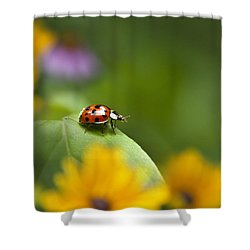 Lonely Ladybug Shower Curtain by Christina Rollo