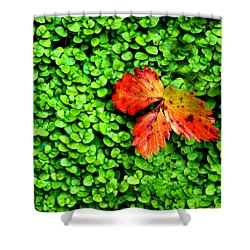 Shower Curtain featuring the photograph Lonely Leaf by Charlie and Norma Brock