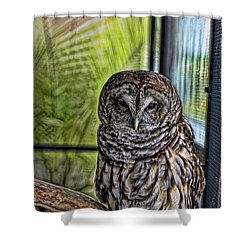 Lonely Owl Shower Curtain