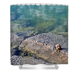 Lonely Shell Shower Curtain by Patricia Greer