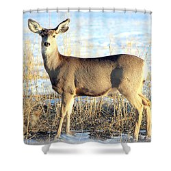 Shower Curtain featuring the photograph Lonesome Doe Sunset by Barbara Chichester