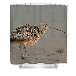 Long-billed Curlew Shower Curtain by Bob and Jan Shriner