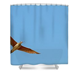 Long-billed Curlew In Flight Shower Curtain