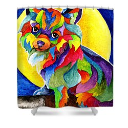 Long Haired Chihuahua Shower Curtain