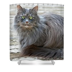 Long Haired Gray Cat Art Prints Shower Curtain