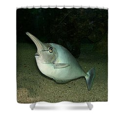 Long Nose Fish Shower Curtain by Sara  Raber