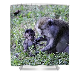 Shower Curtain featuring the photograph Long Tailed Macaque Family by Shoal Hollingsworth