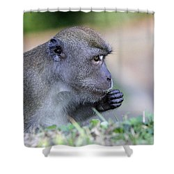 Shower Curtain featuring the photograph Long Tailed Macaque Feeding by Shoal Hollingsworth