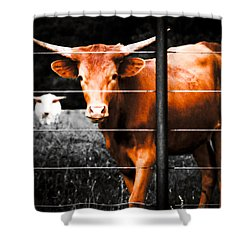 Longhorn Curiosity Shower Curtain