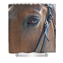 Look In My Eye Shower Curtain by Barbara S Nickerson