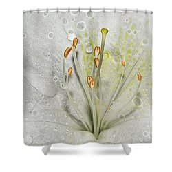 Look Inside A White Azalea Shower Curtain by Tammy Schneider