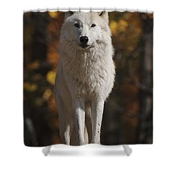 Shower Curtain featuring the photograph Look Out by Wolves Only