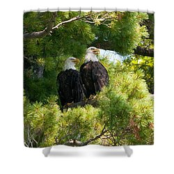 Shower Curtain featuring the photograph Look Over There by Brenda Jacobs