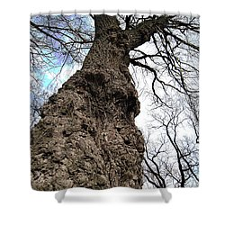 Shower Curtain featuring the photograph Look Up Look Way Up by Nina Silver