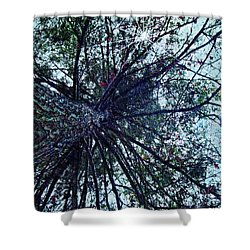 Look Up Through The Trees Shower Curtain by Joy Nichols