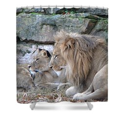 Shower Curtain featuring the photograph Lookee Lions by Amanda Eberly-Kudamik