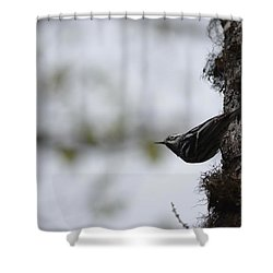 Looking Ahead Shower Curtain by James Petersen